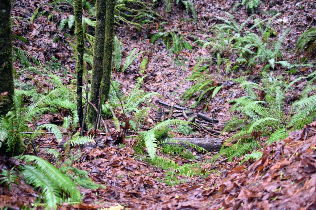 wa-hiking-feb-15-2016-DSC_0120