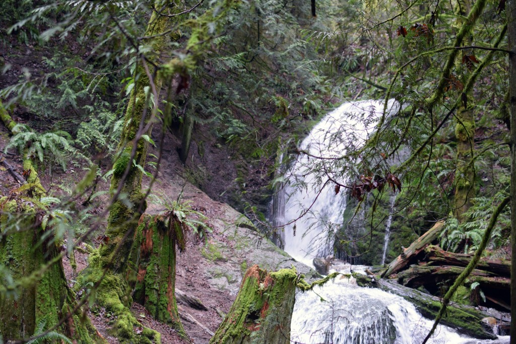 wa-hiking-feb-15-2016-DSC_0121
