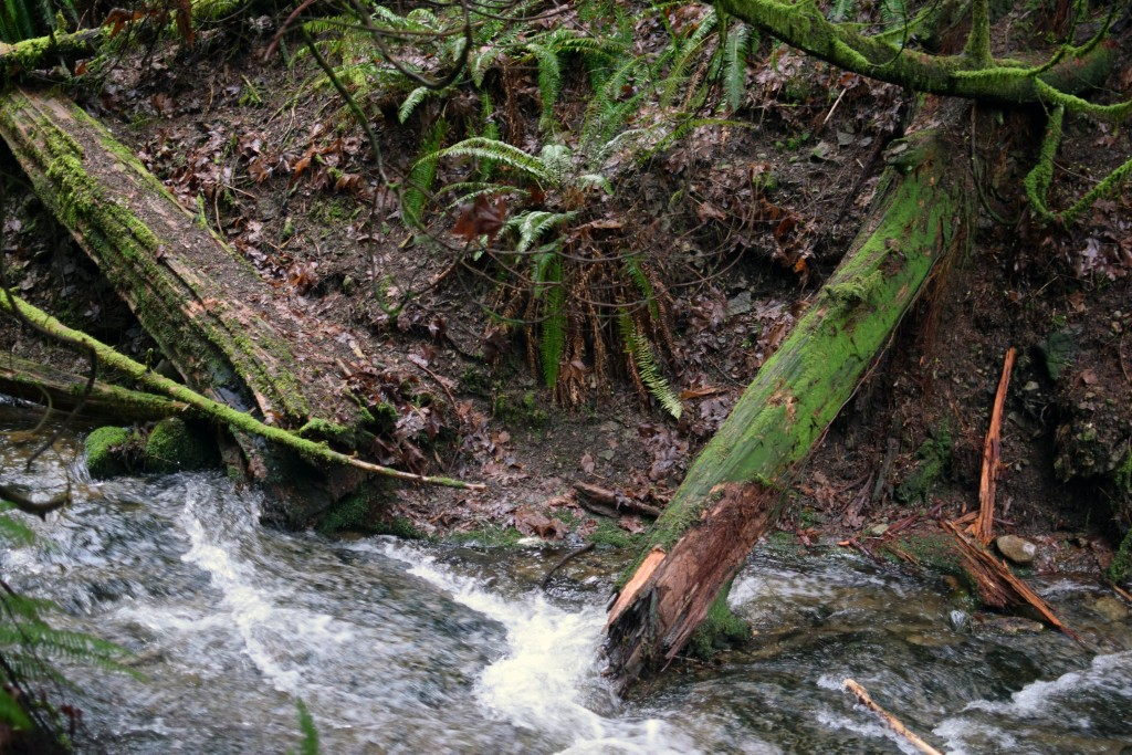 wa-hiking-feb-15-2016-DSC_0129