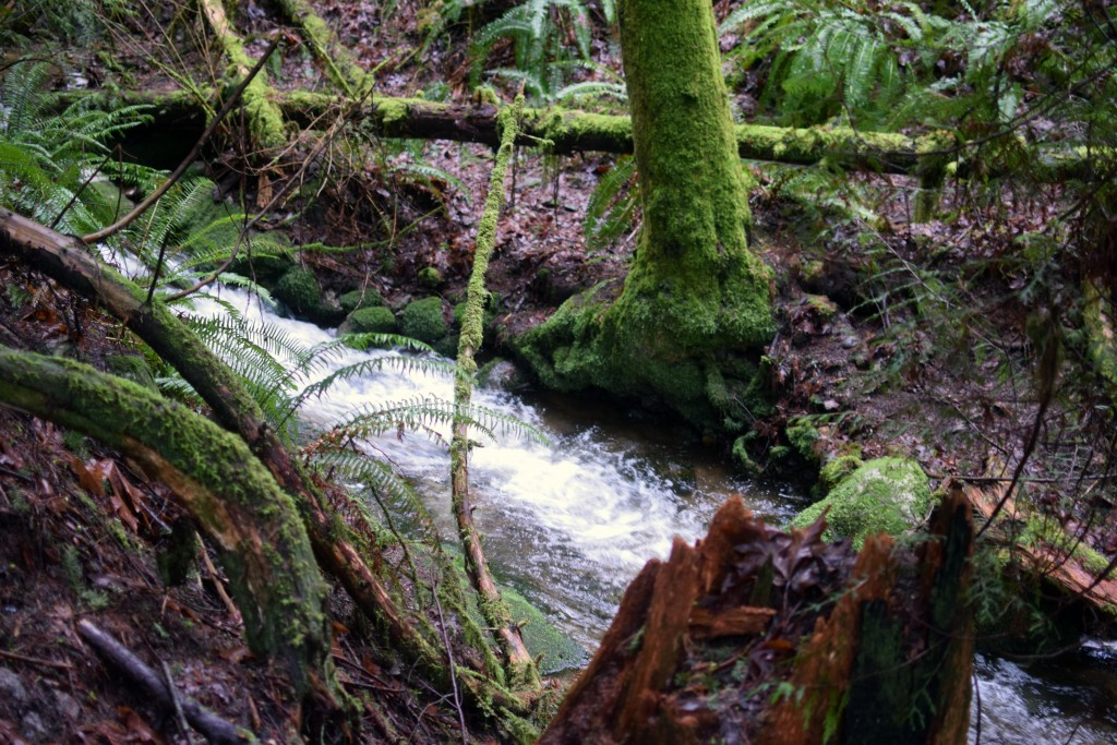 wa-hiking-feb-15-2016-DSC_0137