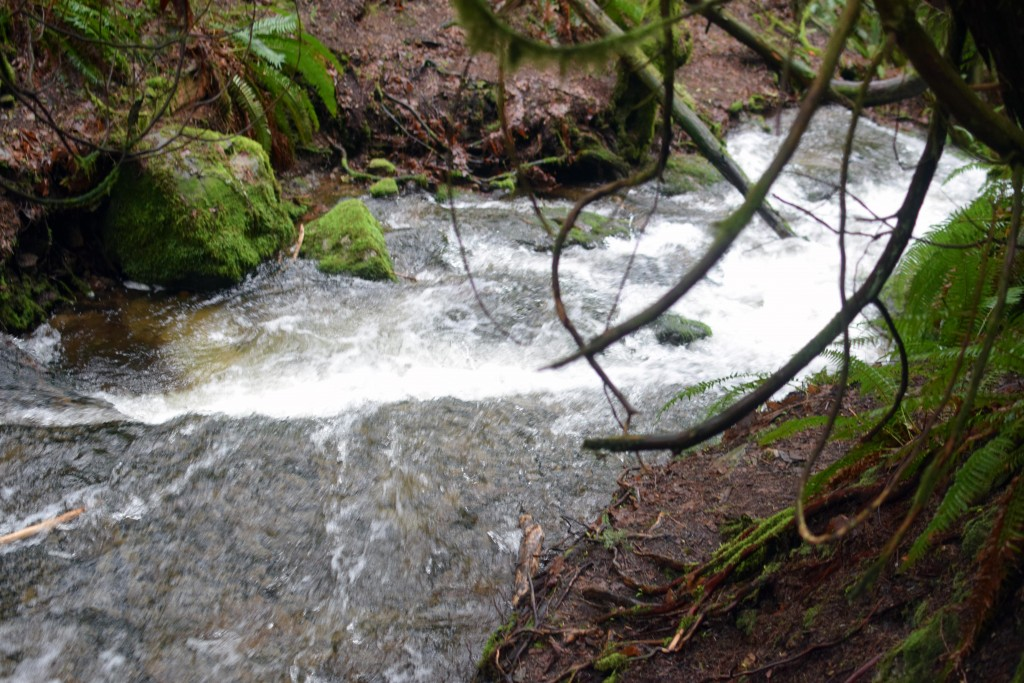 wa-hiking-feb-15-2016-DSC_0139