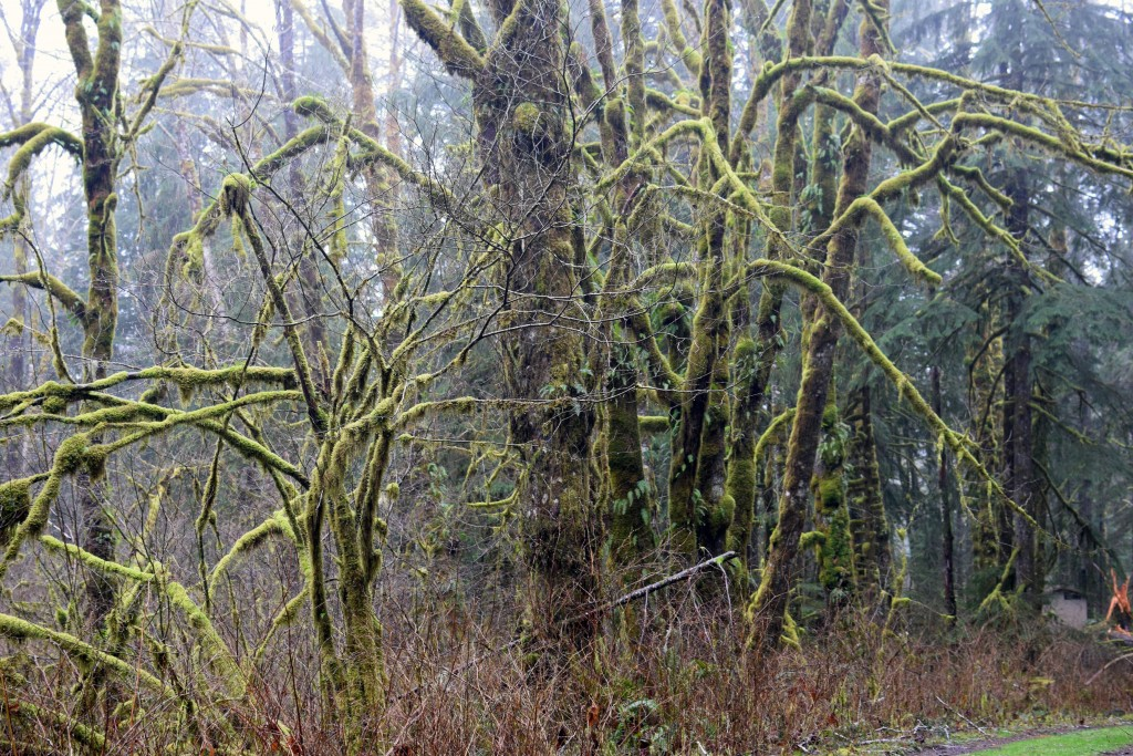 wa-hiking-feb-15-2016-DSC_0143