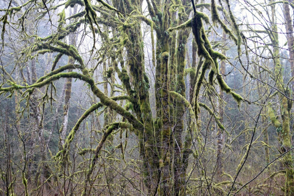 wa-hiking-feb-15-2016-DSC_0144