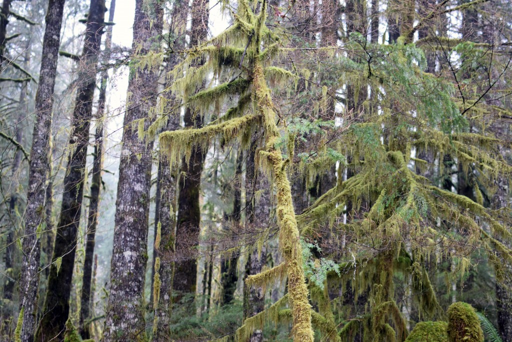 wa-hiking-feb-15-2016-DSC_0148