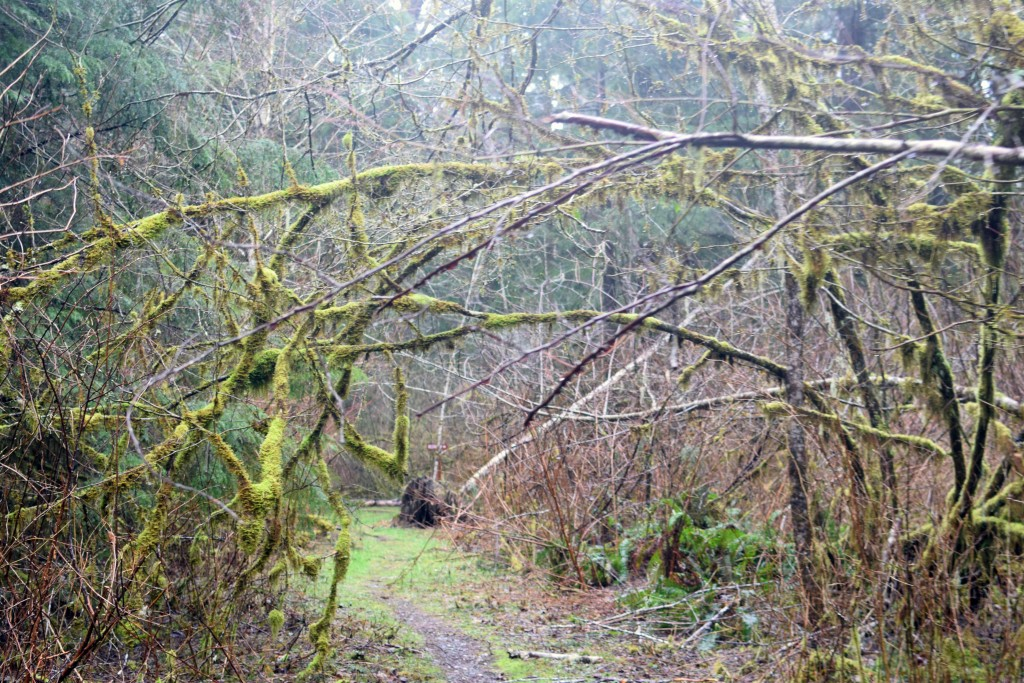 wa-hiking-feb-15-2016-DSC_0154