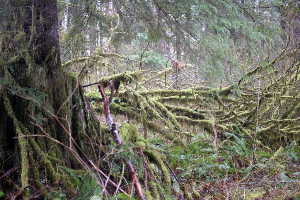 wa-hiking-feb-15-2016-DSC_0155