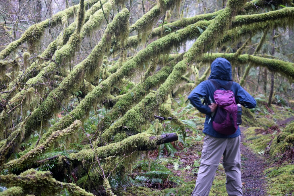 wa-hiking-feb-15-2016-DSC_0160