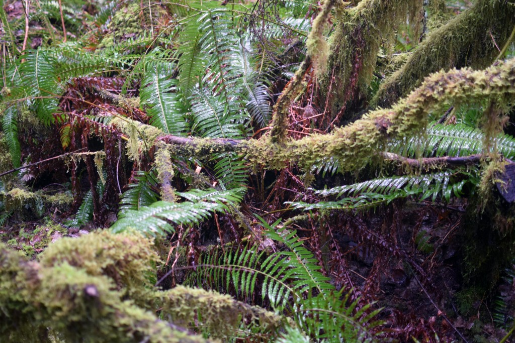 wa-hiking-feb-15-2016-DSC_0162
