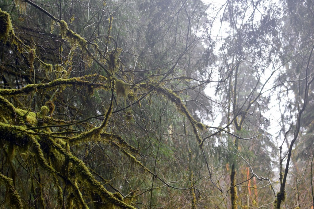 wa-hiking-feb-15-2016-DSC_0164