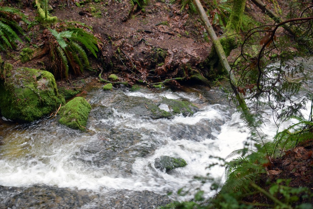 wa-hiking-feb-15-2016-DSC_0136