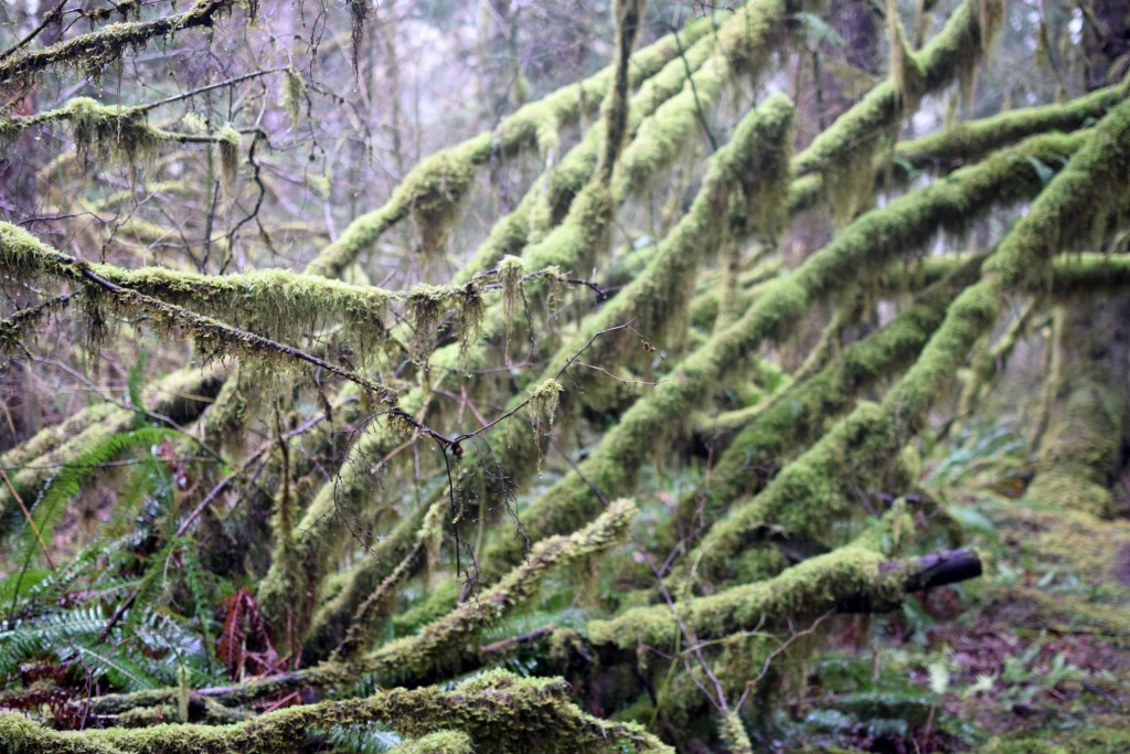 wa-hiking-feb-15-2016-DSC_0158